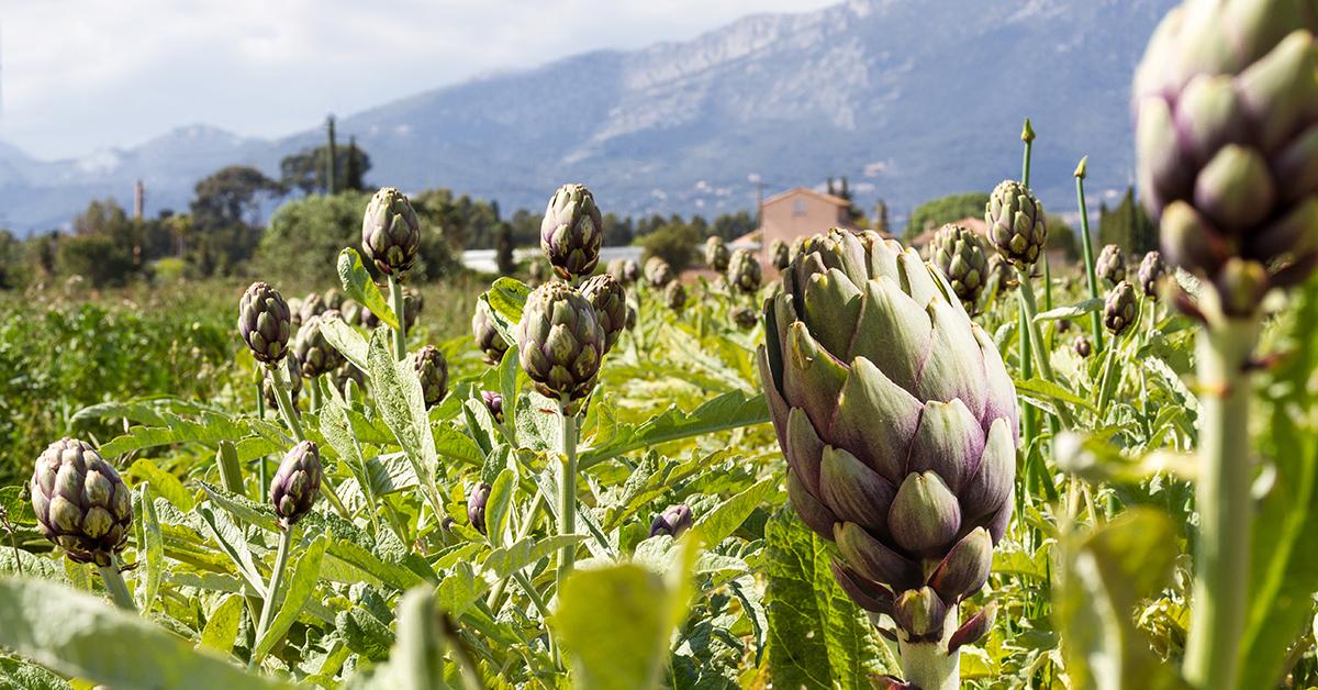 Botanicals: Diese 10 Pflanzen können eine gesunde Ernährung ergänzen