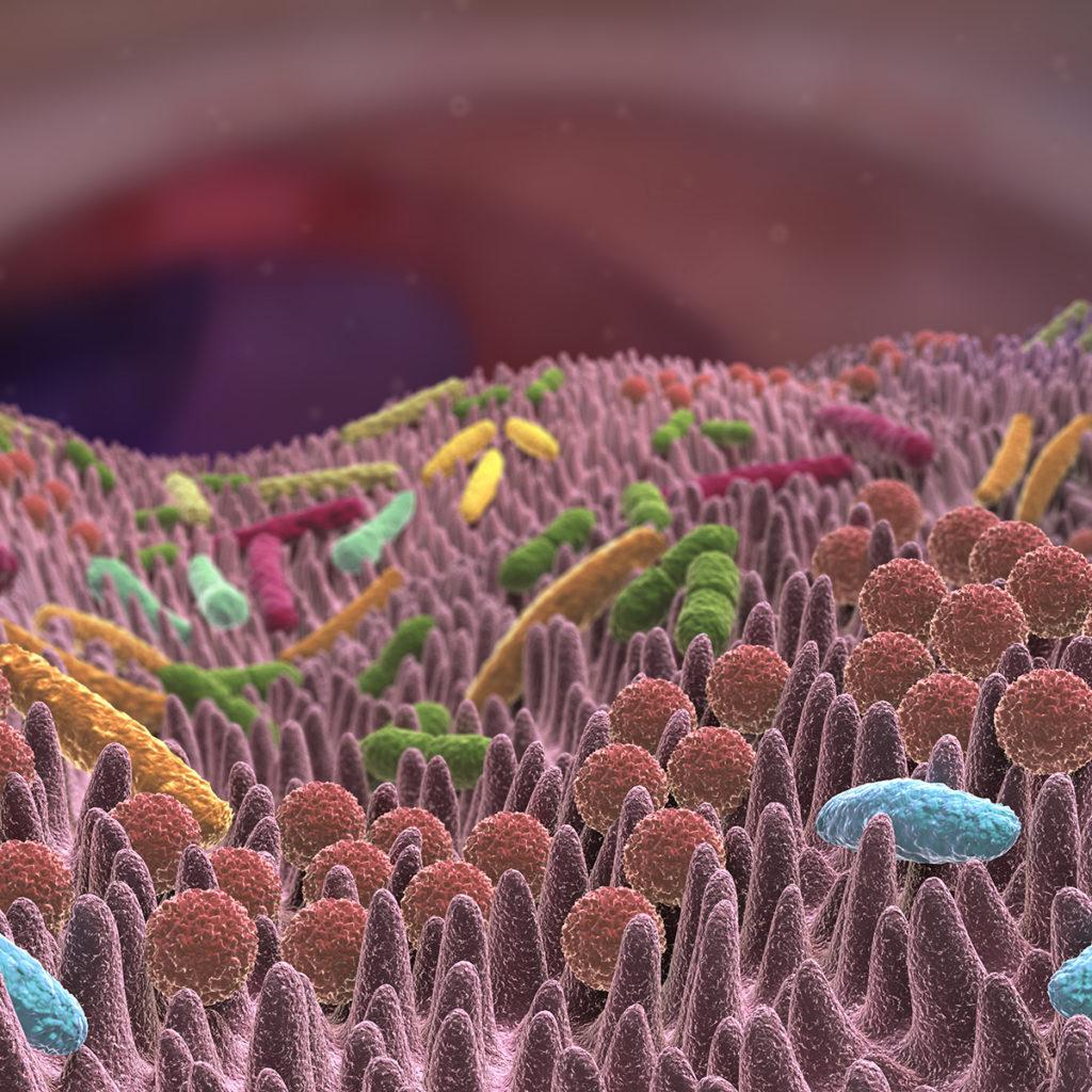 Unser Darm ist Lebensraum für viele Mikroorganismen